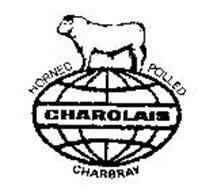 HORNED POLLED CHAROLAIS CHARBRAY