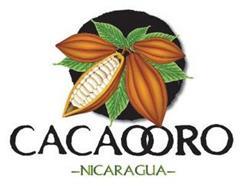 CACAOORO -NICARAGUA-