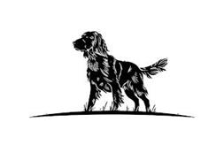 Canis Rex, LLC