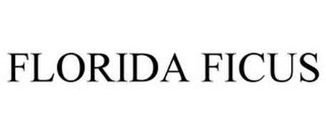FLORIDA FICUS