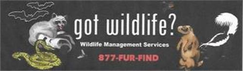 GOT WILDLIFE? WILDLIFE MANAGEMENT SERVICES 877- FUR- FIND