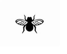 Eyefly LLC