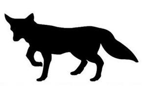 Golden Fox International Corp.