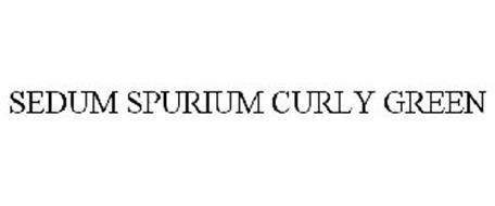 SEDUM SPURIUM CURLY GREEN