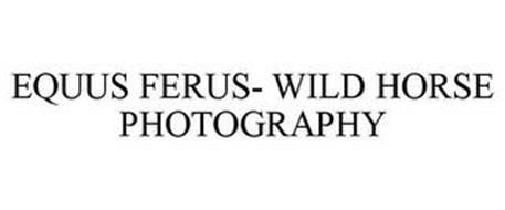 EQUUS FERUS- WILD HORSE PHOTOGRAPHY