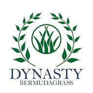 DYNASTY BERMUDAGRASS