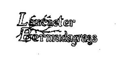 LANCASTER BERMUDAGRASS