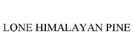 LONE HIMALAYAN PINE