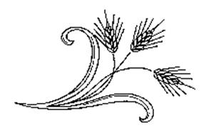 Molipasta S.R.L.