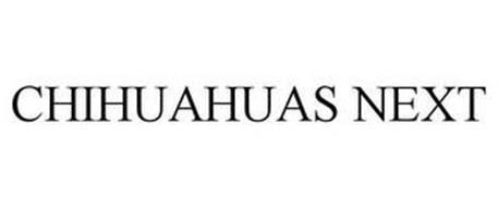 CHIHUAHUAS NEXT