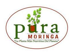 """PURA MORINGA """"LA PLANTA MÁS NUTRITIVA DEL PLANETA"""""""