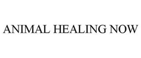 ANIMAL HEALING NOW