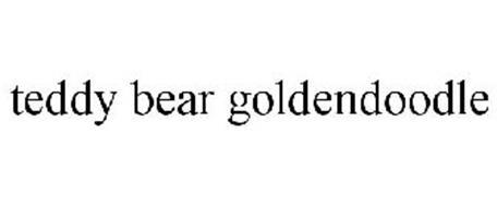 TEDDY BEAR GOLDENDOODLE