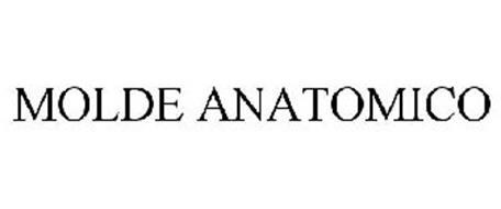 MOLDE ANATOMICO