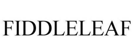 FIDDLELEAF