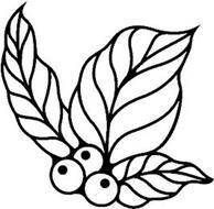 Zephyr Green Coffee LLC