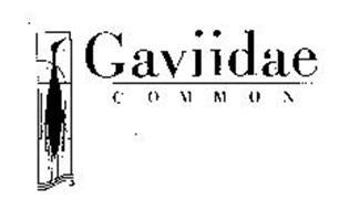 GAVIIDAE COMMON