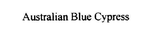 AUSTRALIAN BLUE CYPRESS