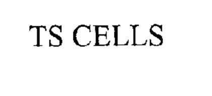 TS CELLS