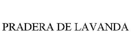 PRADERA DE LAVANDA