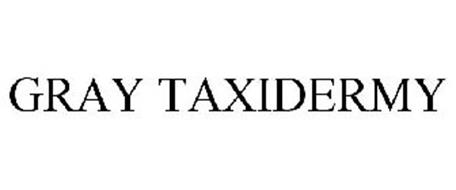 GRAY TAXIDERMY