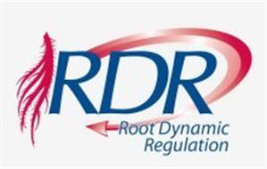 RDR ROOT DYNAMIC REGULATION