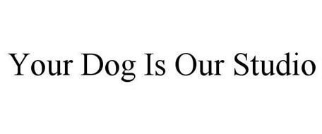 YOUR DOG IS OUR STUDIO