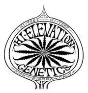 HI TEST HI TERP HIGH SIERRA CALIF HI ELEVATION GENETICS