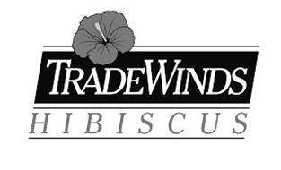 TRADEWINDS HIBISCUS