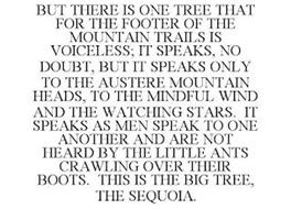 BUT THERE IS ONE TREE THAT FOR THE FOOTER OF THE MOUNTAIN TRAILS IS VOICELESS; IT SPEAKS, NO DOUBT, BUT IT SPEAKS ONLY TO THE AUSTERE MOUNTAIN HEADS, TO THE MINDFUL WIND AND THE WATCHING STARS. IT SPEAKS AS MEN SPEAK TO ONE ANOTHER AND ARE NOT HEARD BY THE LITTLE ANTS CRAWLING OVER THEIR BOOTS. THIS IS THE BIG TREE, THE SEQUOIA.