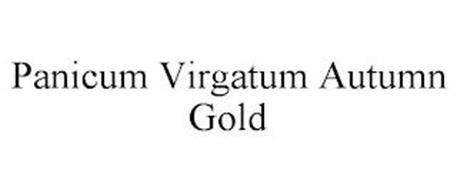 PANICUM VIRGATUM AUTUMN GOLD