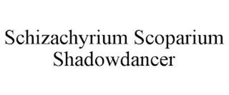 SCHIZACHYRIUM SCOPARIUM SHADOWDANCER