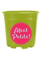 MEET PETITE!