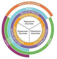 HEART MUSCLE RELAXATION BRAIN BRAIN MOOD MOOD CELLULAR HEALTH CELLULAR HEALTH CELLULAR HEALTH MUSCLE FUNCTION MUSCLE FUNCTION MUSCLE FUNCTION MAGNESIUM GLYCINATE MAGNESIUM TAURINATE MAGNESIUM ASPARTATE