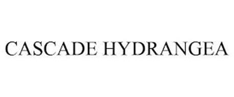 CASCADE HYDRANGEA