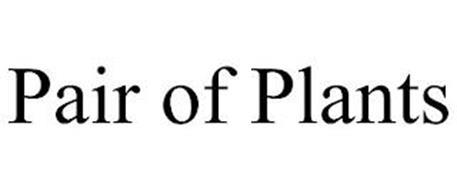 PAIR OF PLANTS